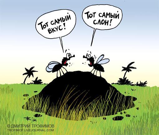 Карикатура: Тот самый слон, Трофимов Дмитрий
