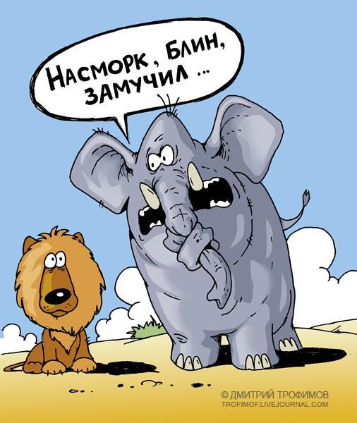 Карикатура: Насморк, Трофимов Дмитрий