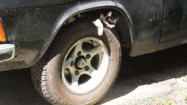 Карикатура: Российские шины и машины самые экологически чистые! Кошку не обманешь!, Владимир Масалов