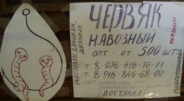 Карикатура: Червяк навозный оптом, Митя