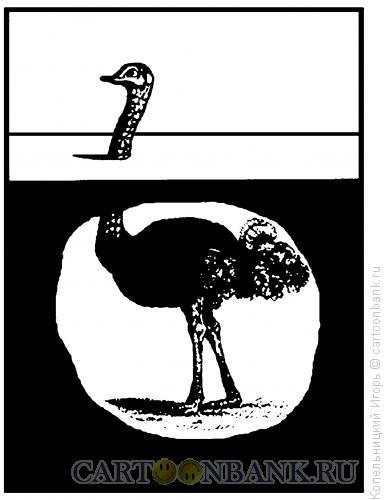 Карикатура: страус под землёй, Копельницкий Игорь