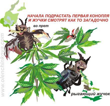 Карикатуры на коноплю сайт о выращивании марихуаны