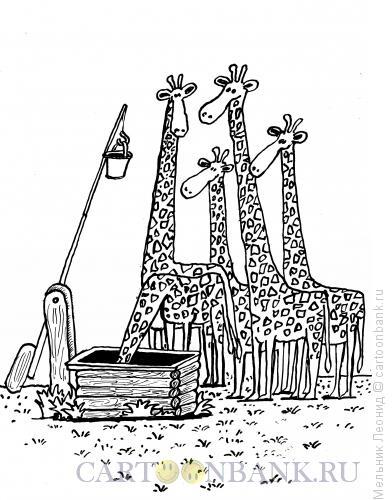 Карикатура: На водопое, Мельник Леонид