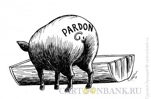 Карикатура: свинья-пардон, Гурский Аркадий