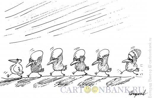 Карикатура: гарем, Богорад Виктор