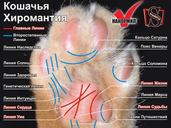 Карикатура: Кошачья хиромантия