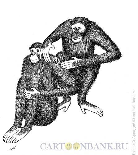 Карикатура: обезьяны и звезда, Гурский Аркадий