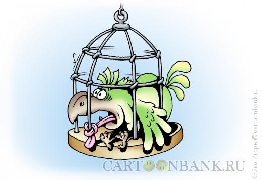 Карикатура: Жертва свободы слова, Кийко Игорь