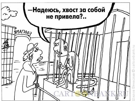 Карикатура: Хвост, Шилов Вячеслав