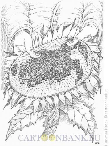Карикатура: подсолнух, Никитин Игорь