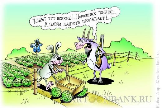 Карикатура: Заяц и капуста, Кийко Игорь