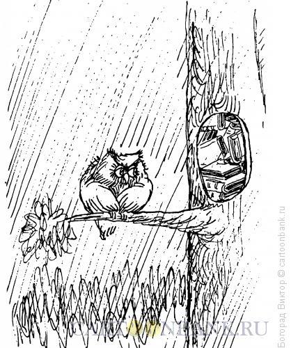 Карикатура: Ученая сова, Богорад Виктор