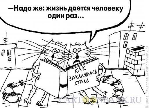 Карикатура: Впечатлительные коты, Шилов Вячеслав