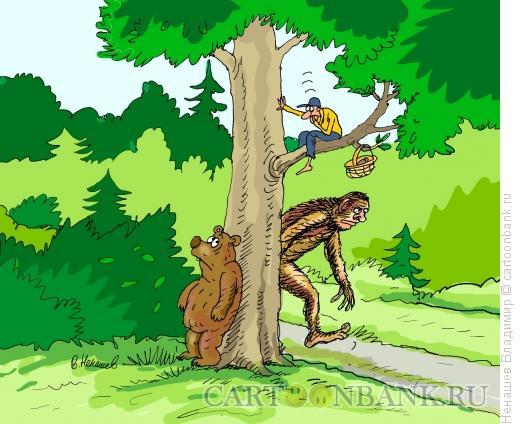 Карикатура: лесные чудеса, Ненашев Владимир