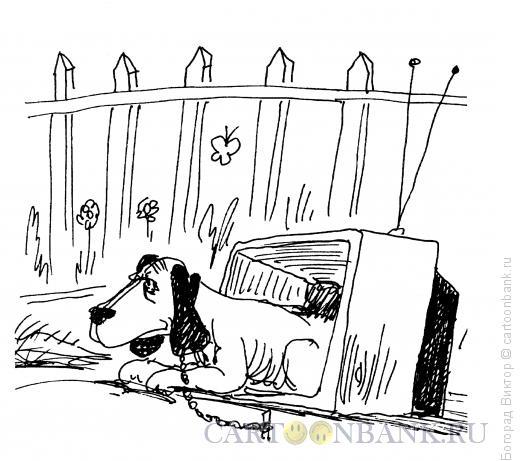 Карикатура: Лучшее применение, Богорад Виктор