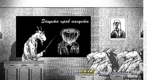 Карикатура: Права капусты, Богорад Виктор