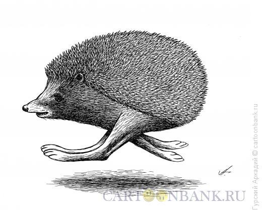 Карикатура: ёжик, Гурский Аркадий