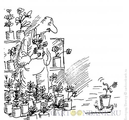 Карикатура: Испуганный цветок, Богорад Виктор
