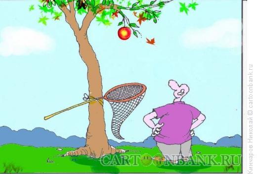 Карикатура: Яблоко как ценность, Кинчаров Николай