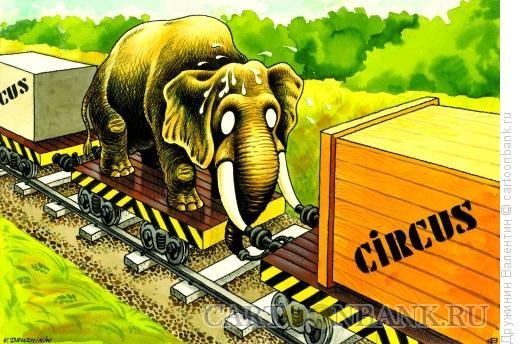 Карикатура: Куда уехал цирк, Дружинин Валентин