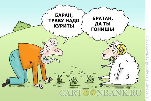 Карикатура: Наркобаран, Тарасенко Валерий