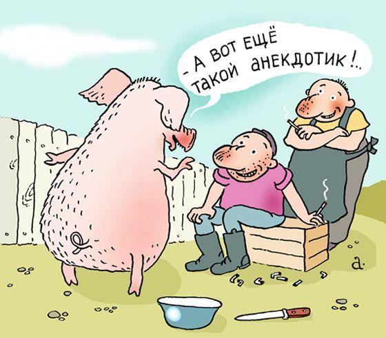 Карикатура: Анекдоты свиньи, Василий Александров