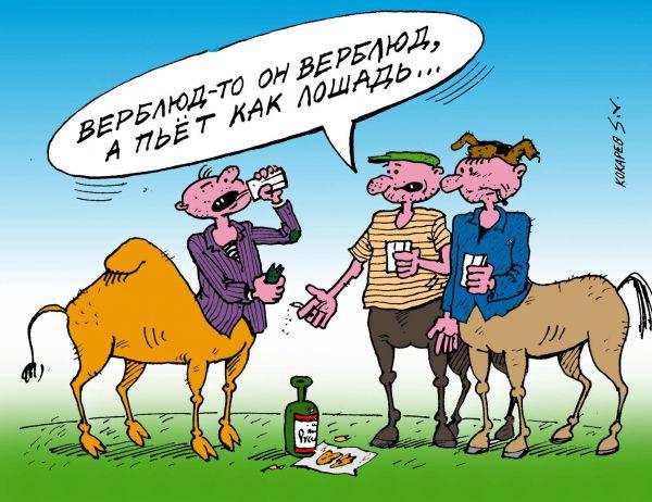 Карикатура: верблюд, кокарев