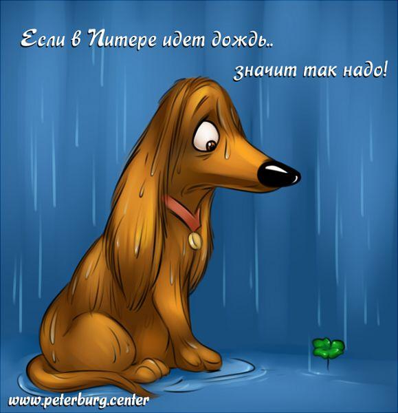 Карикатура: Если в Питере илет дождь, Эфен Гайдэ
