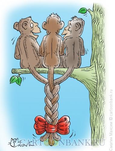 Карикатура: Обезьянья косичка, Смагин Максим