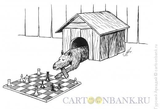 Карикатура: собака в будке, Гурский Аркадий