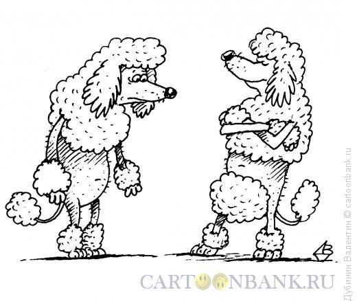 http://www.anekdot.ru/i/caricatures/normal/15/5/8/strizhka-pudelya.jpg