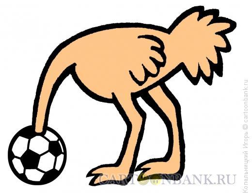 Карикатура: страус на футболе, Копельницкий Игорь