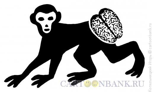 Карикатура: обезьяна, Копельницкий Игорь