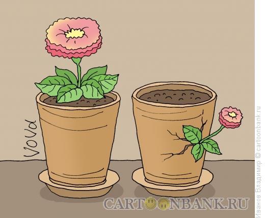 Карикатура: Осторожный цветок, Иванов Владимир