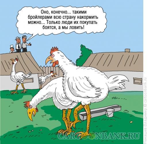 Карикатура: продукты и курятина, Ненашев Владимир