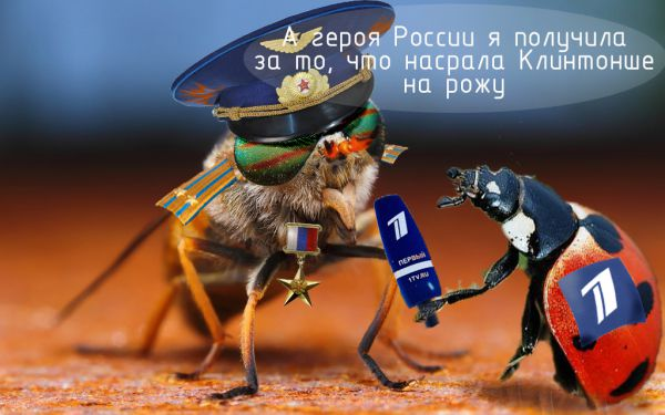 Карикатура: Героическая муха, Braticporazumu
