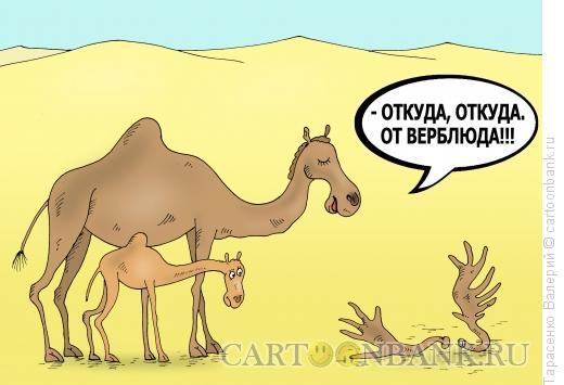 Карикатура: Корабли пустыни, Тарасенко Валерий