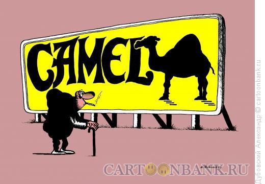 Карикатура: Camel, Дубовский Александр