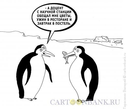 Карикатура: Случай в Антаркдиде, Тарасенко Валерий