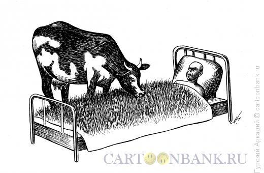 Карикатура: корова у постели, Гурский Аркадий
