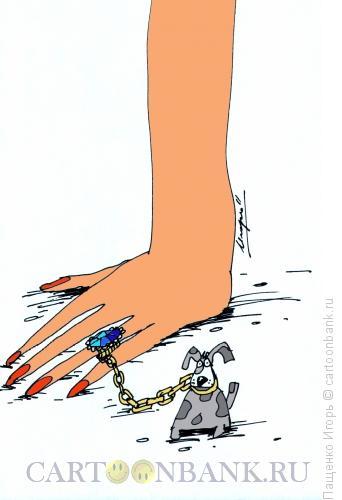 Карикатура: перстень, Пащенко Игорь