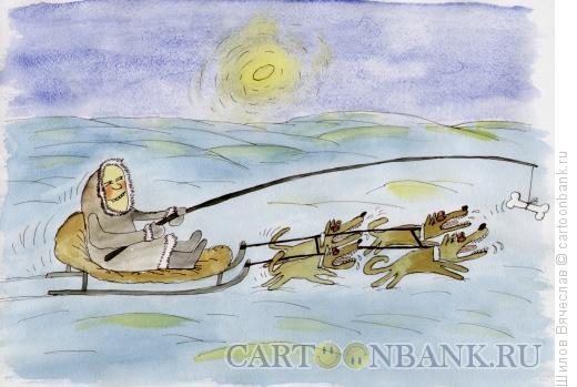 Карикатура: Чукча и собаки, Шилов Вячеслав