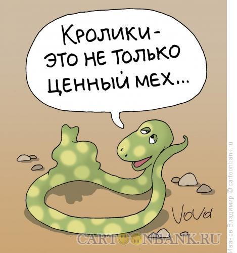 Карикатура: Ценность кролика, Иванов Владимир