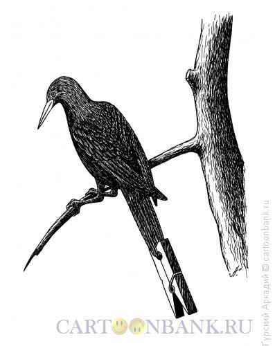 Карикатура: птица на ветке, Гурский Аркадий