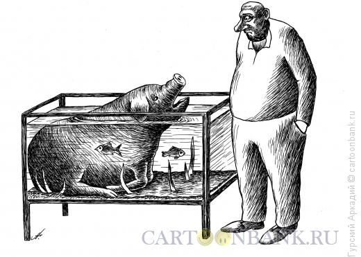 Карикатура: свинья в аквариуме, Гурский Аркадий