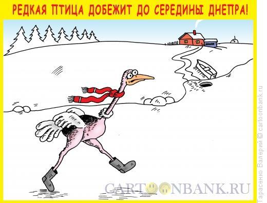 Карикатура: Редкая птица, Тарасенко Валерий