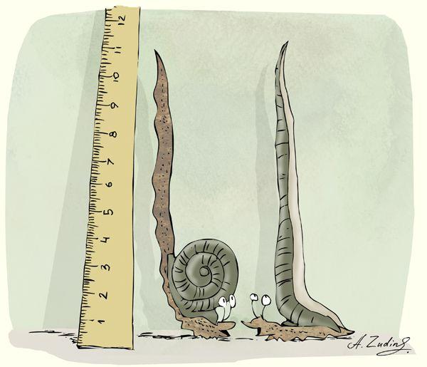 Карикатура: одиннадцать сантиметров, Александр Зудин