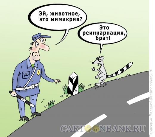 Карикатура: Реинкарнация, Тарасенко Валерий