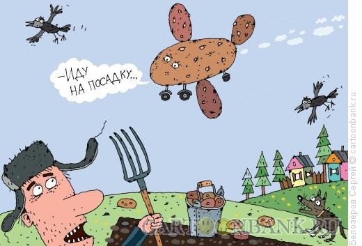 Карикатура: Картофель, Белозёров Сергей