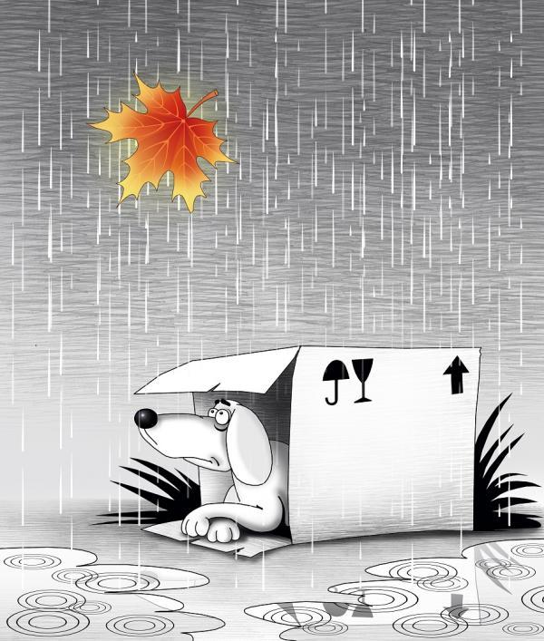 Карикатура: Осень, Сергей Корсун